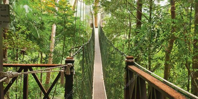 پارک جنگلی تامان نگارا مالزی